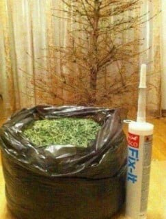 I've just taken the Christmas tree from the attic.